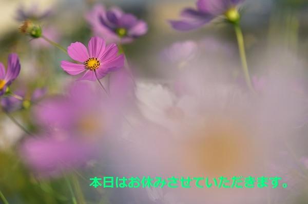 D81_4560.jpg