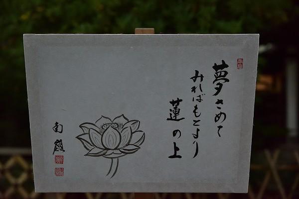 D81_5828.jpg